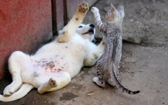 Cats vs Dogs: the ultimate battle for supremacy