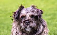 Pelaje perro: ¿qué hacer para mantenerlo sano?