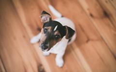 Malattie della vulva del cane: malattie del cane