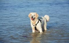 Spiagge per cani Marche: stabilimenti petfriendly