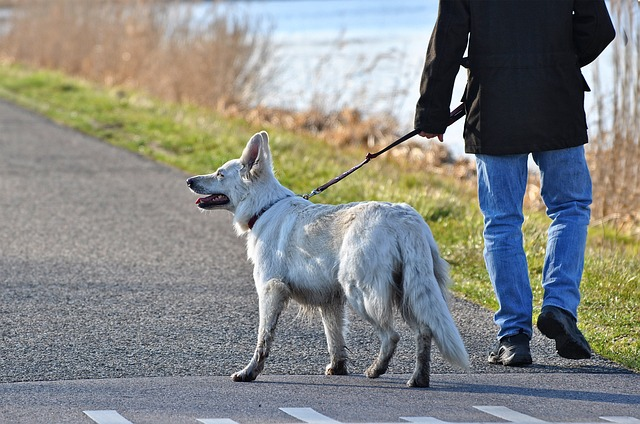 Dog walking: five tips to a better dog walking