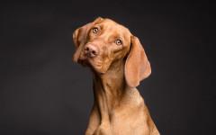 Succhi verdi nel cane nella cura dei tumori del cane