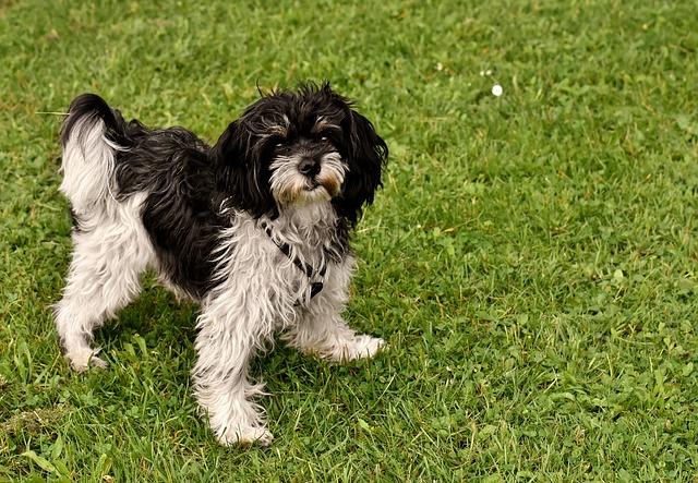 Micoterapia nel cane: rinforzare difese immunitarie del cane