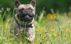 Togliere zecca al cane: come farlo in sicurezza?