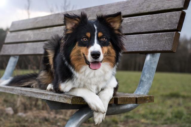 Cane geloso: cosa fare e come comportarsi con lui
