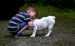The best family dogs: making the best choice