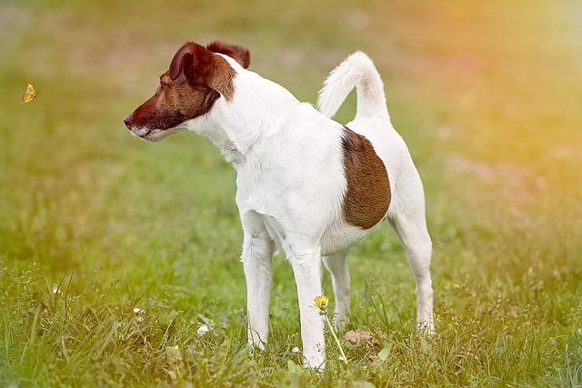 Proteinuria Nel Cane Monitoraggio E Terapia Dogalize