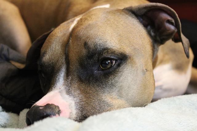 Difende un cane e viene picchiato: la storia di Giacinto a Nardò
