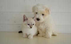 Umanizzare cane e gatto: perché è sbagliato?