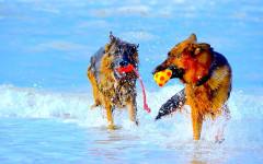 Spiagge per cani Abruzzo: spiagge per Fido