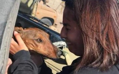Cane cade da aereo: la storia a lieto fine di Gaspar