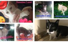 Gatti adulti cercano casa: appello per adozione