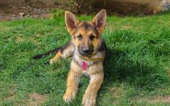 Salvato cane legato in un magazzino, solo e senza acqua