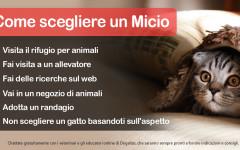 Infografica: i consigli su come scegliere un gatto