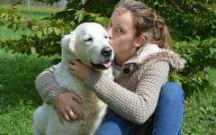 Cani capiscono emozioni umane: secondo uno studio sì