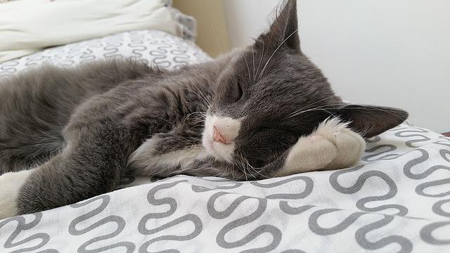 Gatti sono attratti dal lettone: come mai?