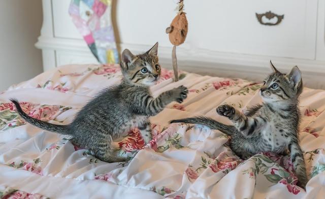 Juguetes gatos: variedad, usos y diseños