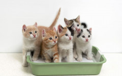 Best Cat Litter: is this really the World's Best Cat Litter?