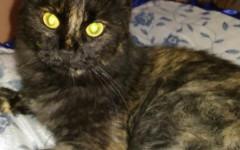 Lucy cerca casa, aiutiamola! Appello per adozione