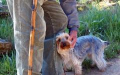 Razze canine per anziani: quali sono le più adatte?
