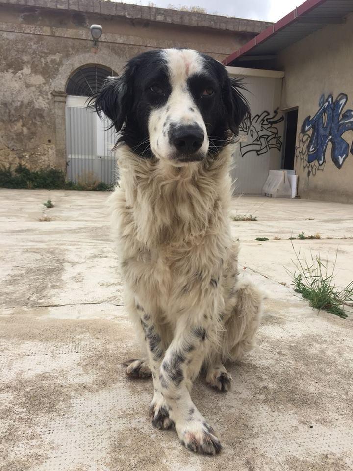 Penny cerca casa, aiutiamola! Appello per adozione