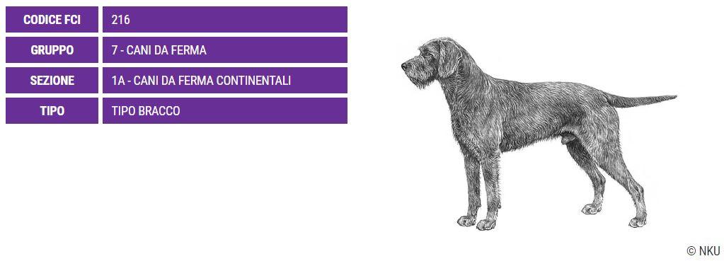 Pudel Pointer, carattere e prezzo - Razze cani