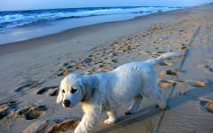 Spiagge per cani Puglia: vacanze con animali