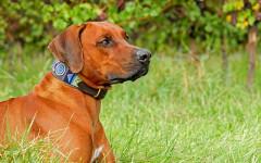 Collar antiparasitario perro: ¿cuál es la mejor opción?