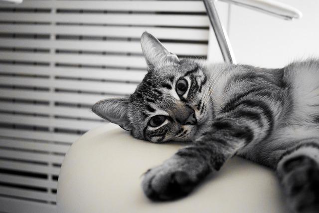 Gatto in casa: ecco quanto e perché fa bene averne uno in casa