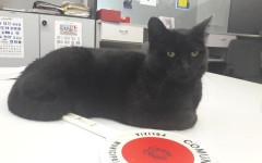 Gatto vigile: il gatto Ruffy al comando di polizia municipale