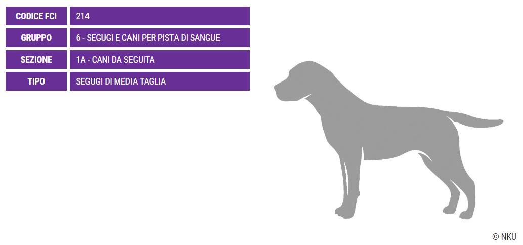 Segugio Ellenico, carattere e prezzo - Razze cani