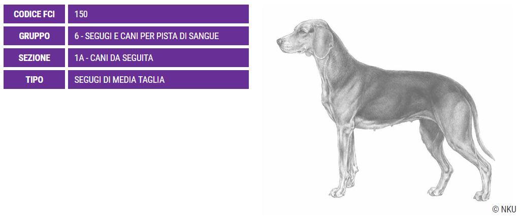 Segugio serbo, carattere e prezzo - Razze cani