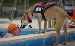 Service dog registration: what is it and how it works