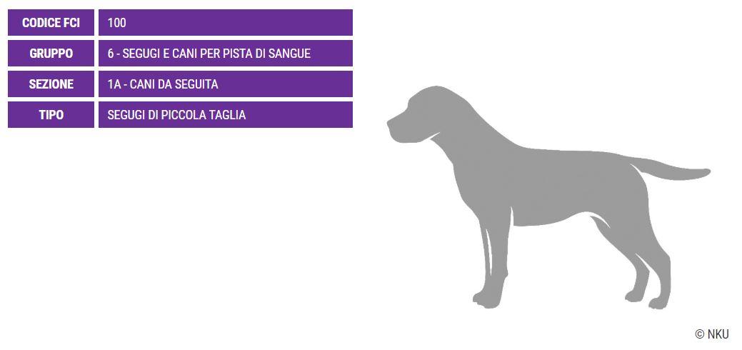 Segugio della Westfalia, carattere e prezzo - Razze cani