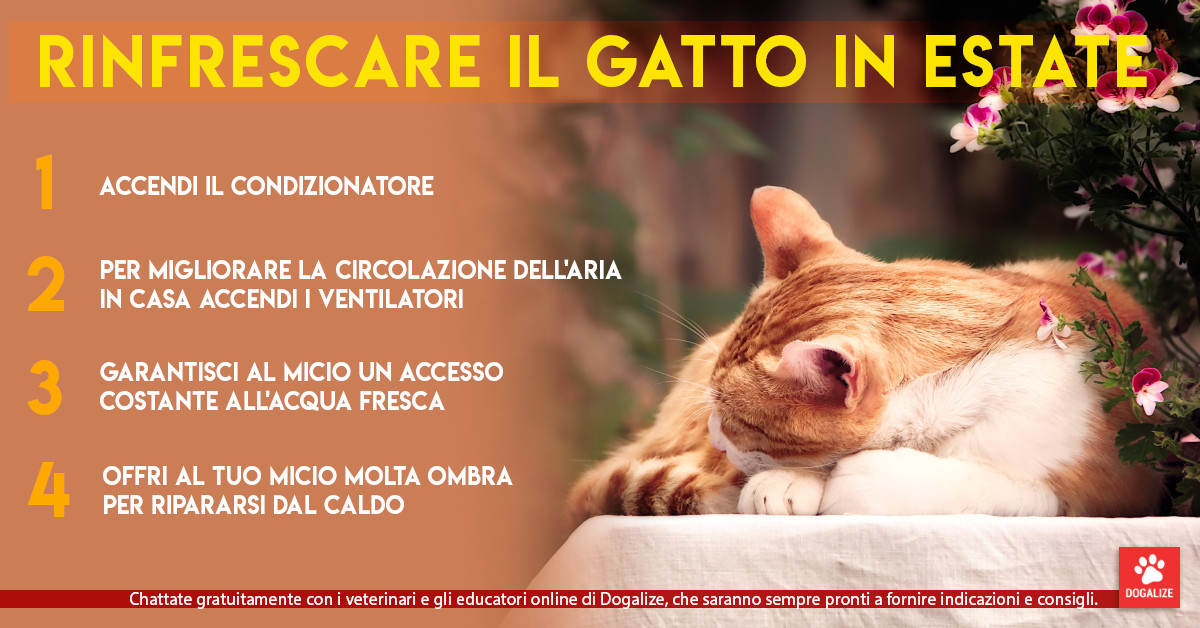Infografica: come rinfrescare gatto in estate