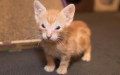 Gatto senza palpebre lotta per la vita e trova la felicità