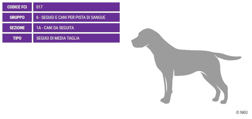 Griffon Nivernais, carattere e prezzo - Razze cani