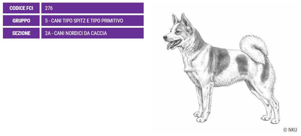 Norrbottenspets, carattere e prezzo - Razze cani