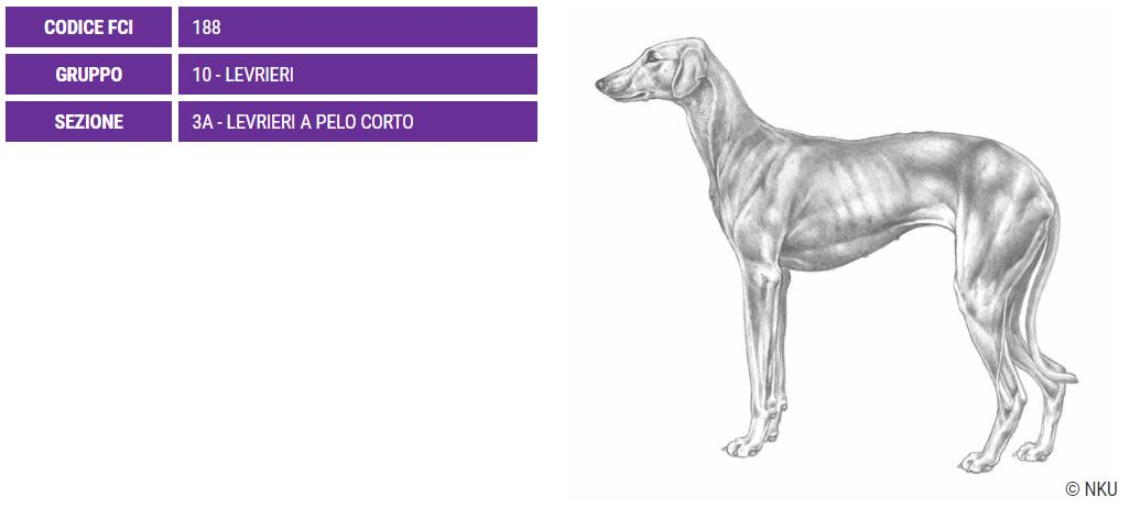 Sloughi, carattere e prezzo - Razze cani