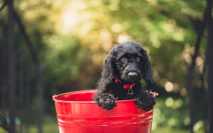 Prolife cani: alimenti di qualità e Prolife crocchette per cani