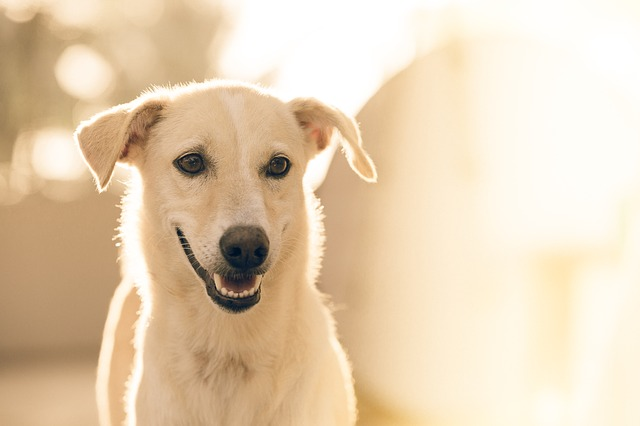 Pancreatitis in dogs: causes, symptoms and treatment