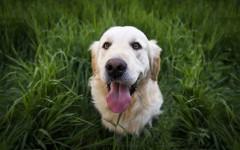 Purina cibo per cani, prodotti e snack di qualità per cani