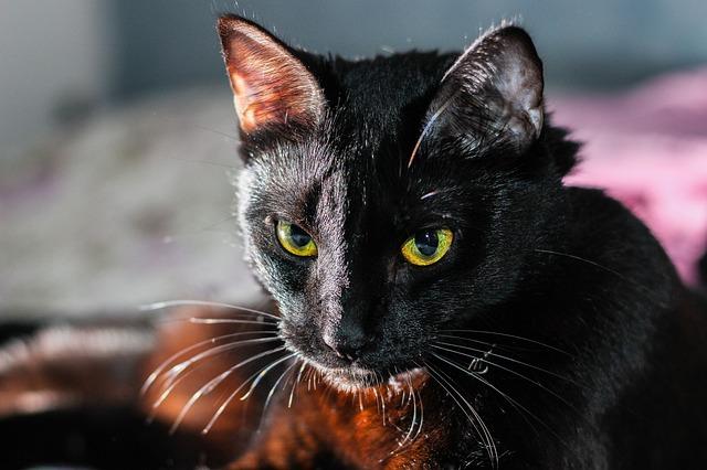 Gourmet gatto, linea adatta ai gatti di ogni età