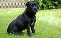 Benefici agopuntura nel cane: quali sono?