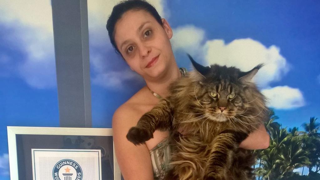 Gatto più lungo del mondo: è il gatto Barivel di Vigevano