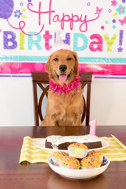 Torta di compleanno per cani: ricette per cani