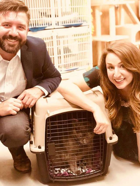 Gatto obeso adottato: la storia di Bruno, il gatto su due zampe