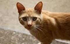 Partes del gato: anatomía externa de los felinos