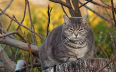 Peso del gato: cuánto debe pesar mi gato
