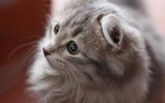 Adoc gatto: solo il meglio per i nostri amici felini